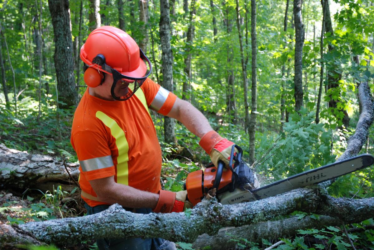 Loggers outdoors using chainsaw on tree