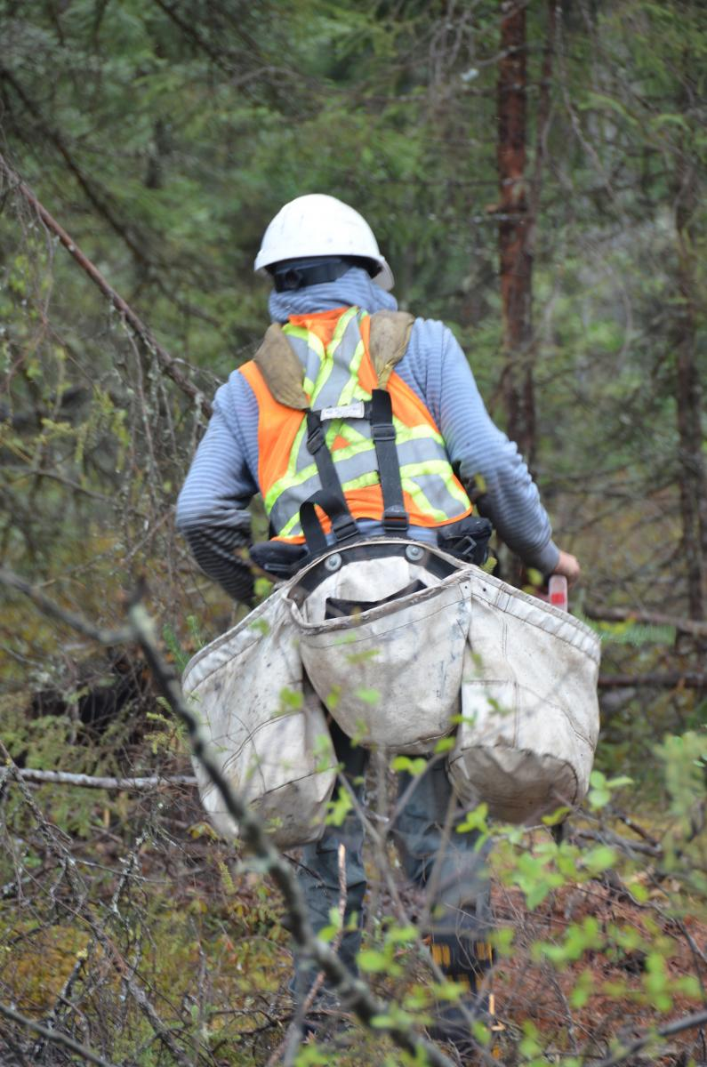 Into the wild: Tree planting in northern Ontario ...
