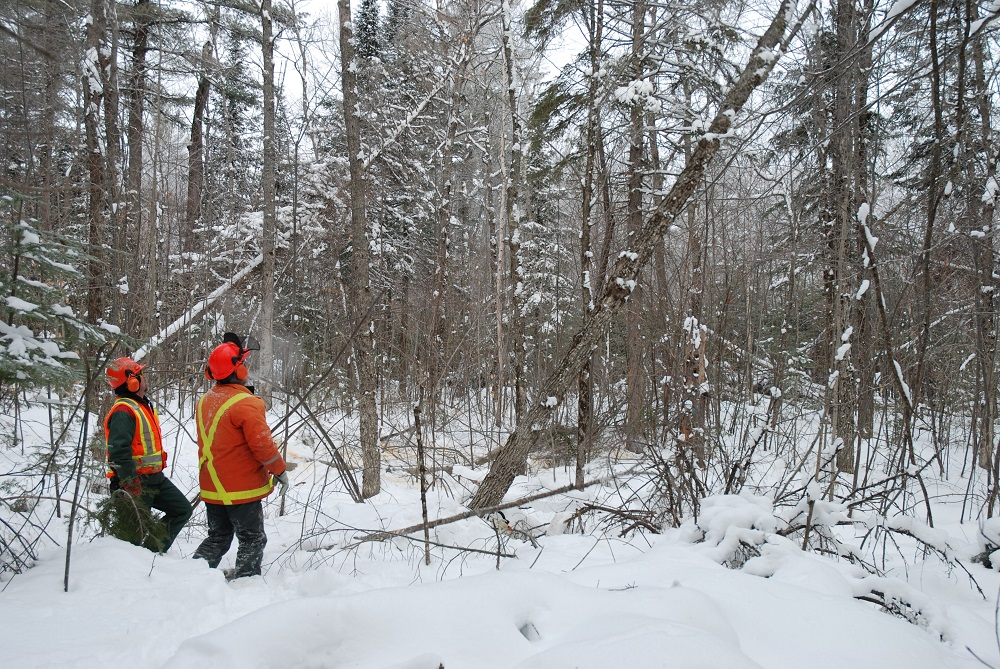 Two workers in winter forest