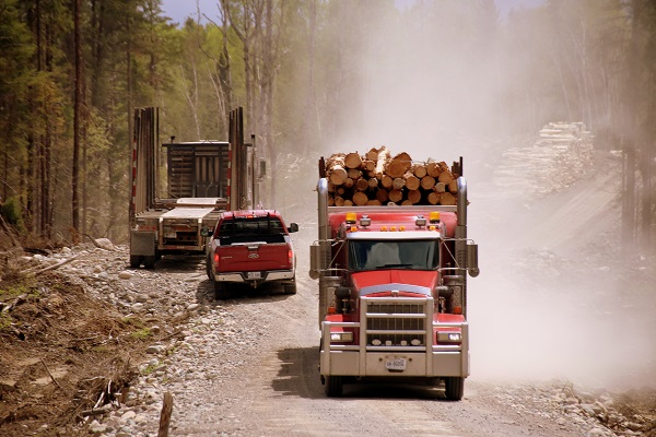 Pick-up drives between two logging trucks