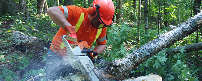 Approved trainer demonstrating safe chainsaw use